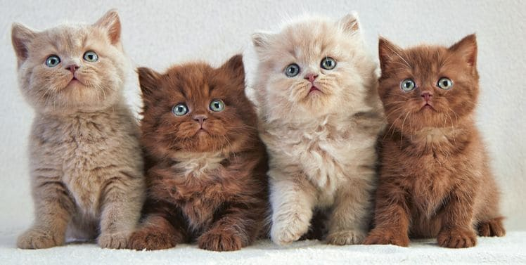Innocent Kittens